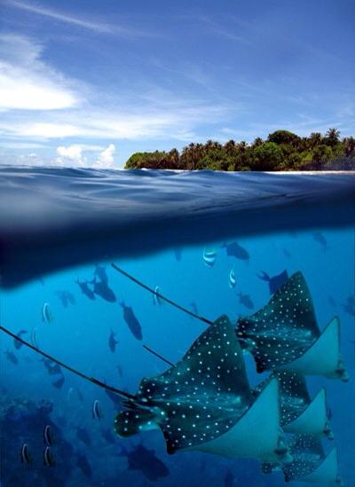 Sa Mu underwater jellyfish Photographer Fotografo